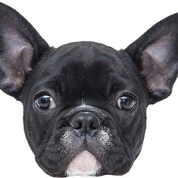 Oscar the French Bulldog by MattSauder