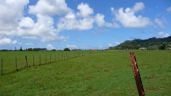 Kauai Pasture by abryant
