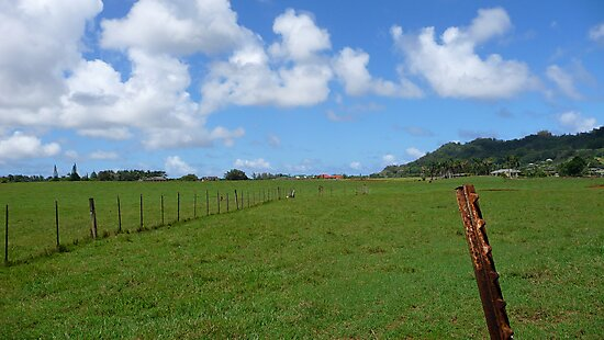 Kauai Pasture by abryant