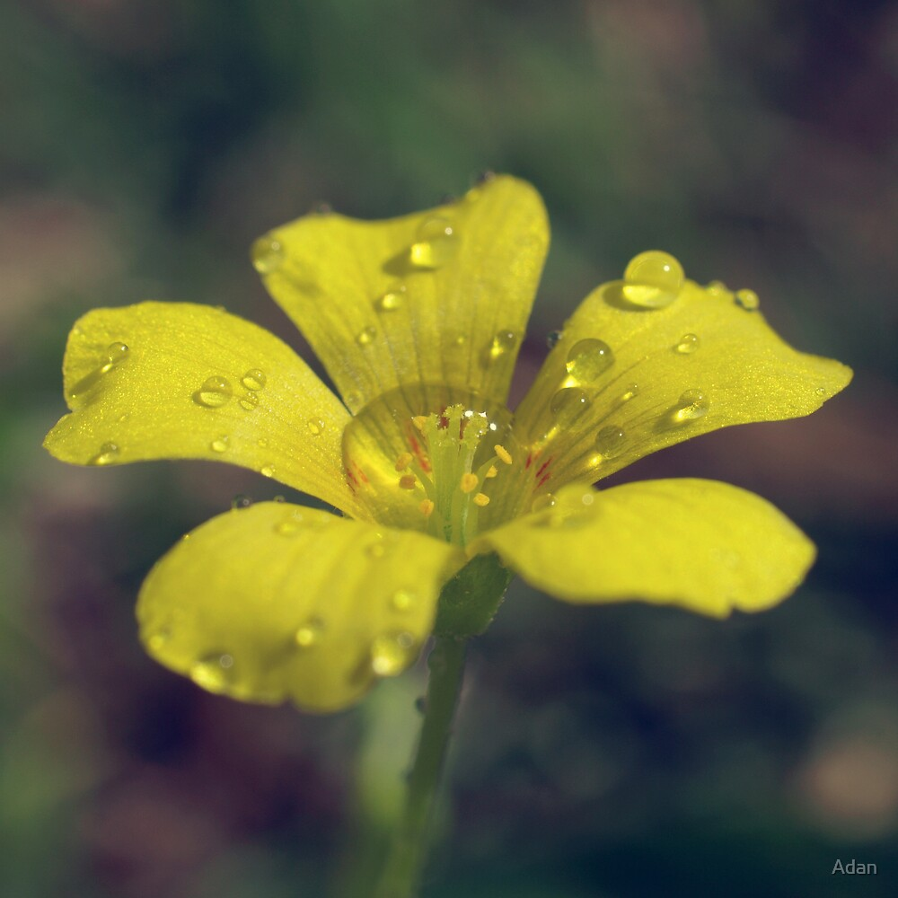 after the rain by Adan