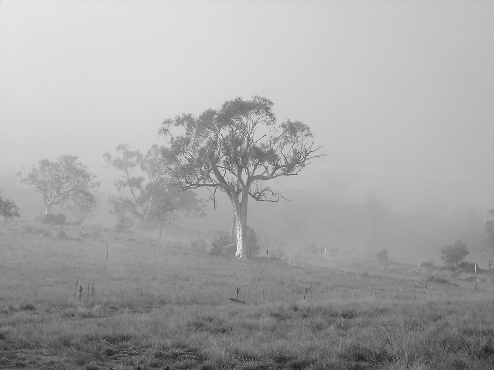Tall Tree in fog  by Matthew  Smith