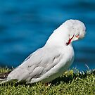 Proud seagull 09 by kevin chippindall