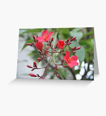 Simply Red; Blooming Tree in Wat Garden; La Mirada, CA USA Greeting Card
