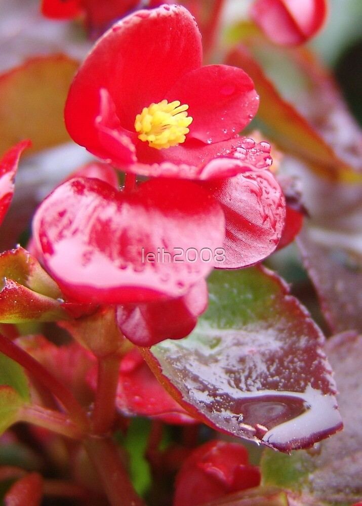 Spring morning dew in Los Angeles, CA USA by leih2008