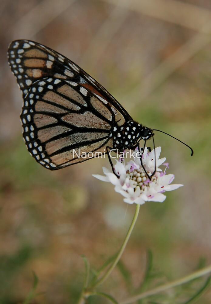 Butterfly Beauty by Naomi Clarke