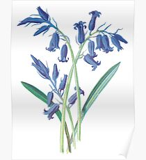 Hyacinth Plant Art Painting Poster