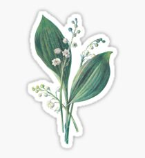 Lily of The Valley Plant Art Painting Sticker