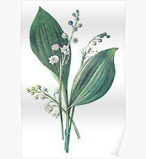 Lily of The Valley Plant Art Painting Poster