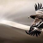 Desert Eagle by Cliff Vestergaard