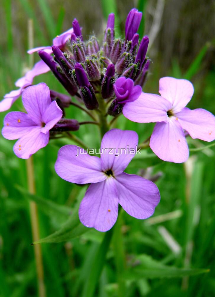Purple Wild Flower by jwawrzyniak