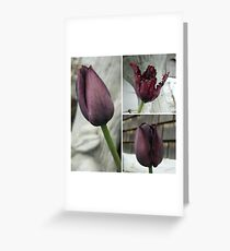 Spring Beauties (flowers, photography, nature) Greeting Card
