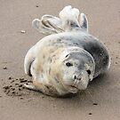Seal Play by Wrigglefish
