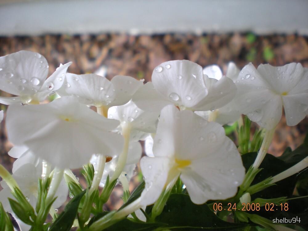 Row of White by shelbu94