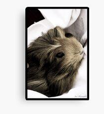 Pet Hamster Canvas Print