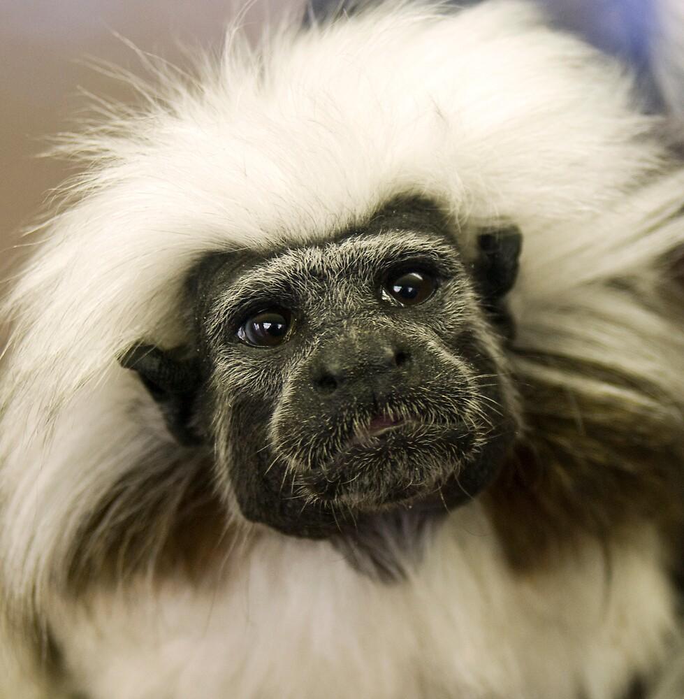 monkey by Samantha Coe
