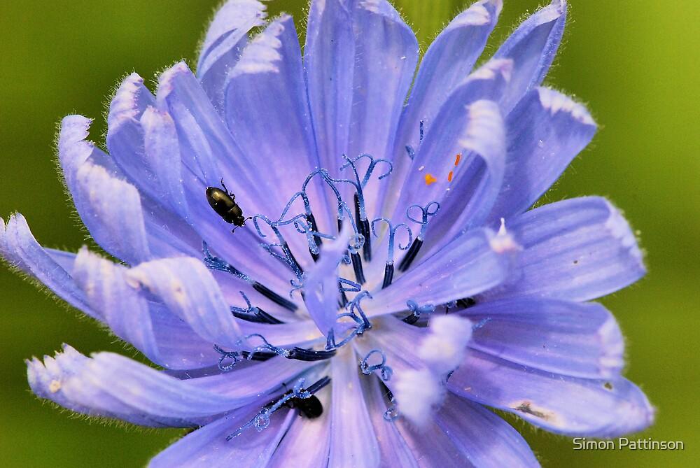 Flower by Simon Pattinson