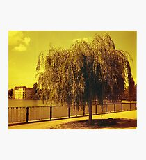 Red Tree Photographic Print