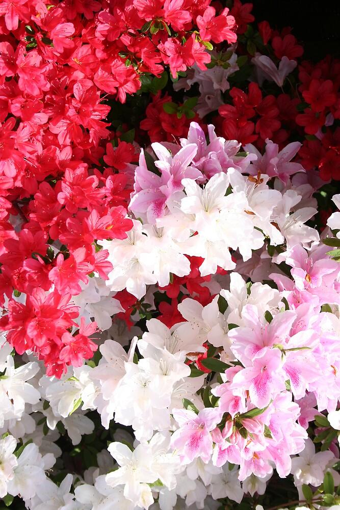 Flowers 08 by Terry Walker