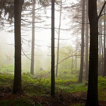 Foggy day by domcia