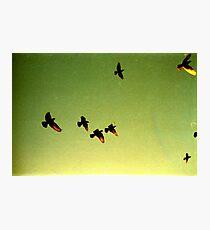green sky birds, phnom penh, cambodia Photographic Print