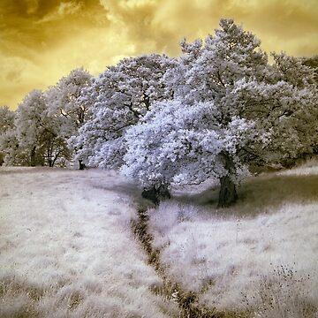 Yellow Sky by Banath