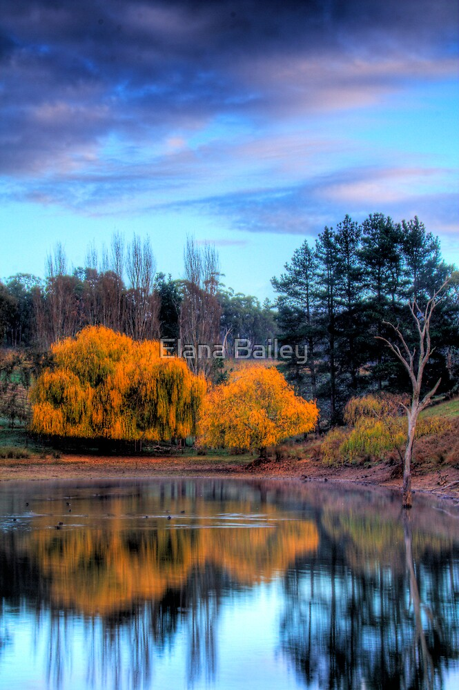 Autumn colours and reflections, Adelaide Hills by Elana Bailey
