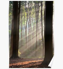 Sun rays in misty morning Poster