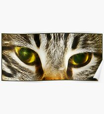 Tigress eyes Poster
