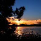 Sunset Vista - From Warners Bay NSW Australia by Bev Woodman