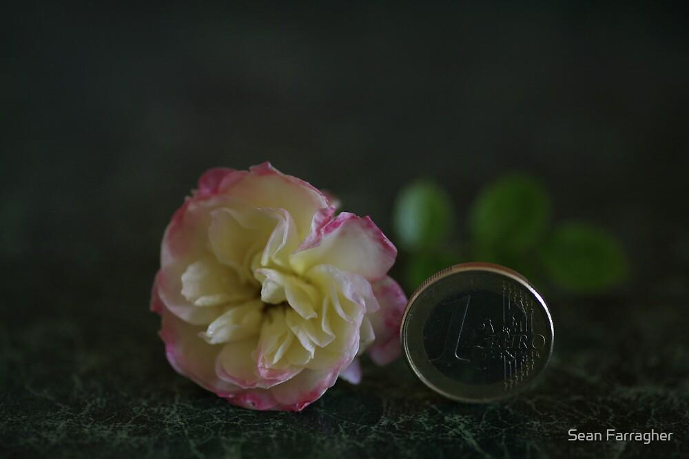 EURO ROSE by Sean Farragher