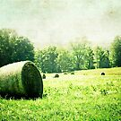 Hay by Donna M Condida