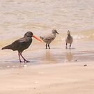 Oyster Catcher and chicks....day out at the beach........!  by Roy  Massicks