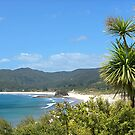 Medlands Beach and the Cabbage Tree......!!! by Roy  Massicks