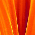 orange grass by SNAPPYDAVE