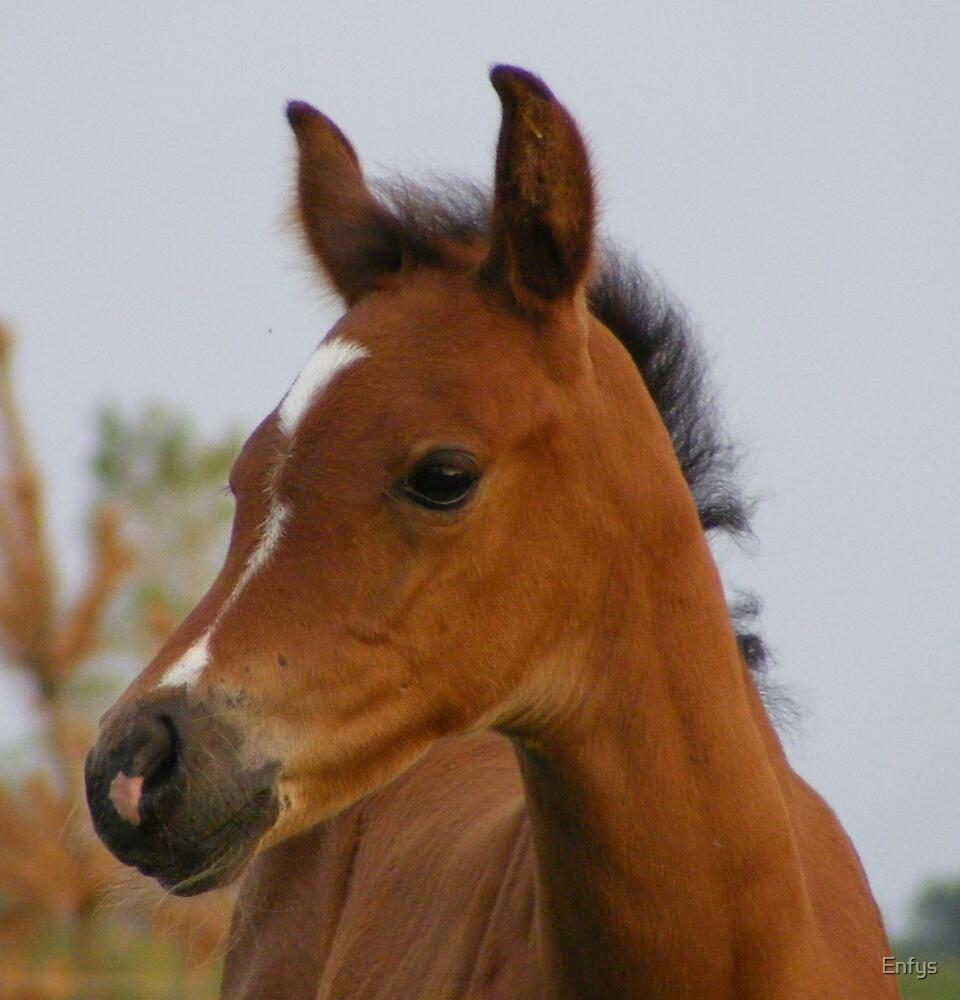 Quarab foal by Enfys