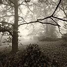 Misty Trees by Geoff Smith