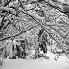 Blackheath Snow 4 by Geoff Smith