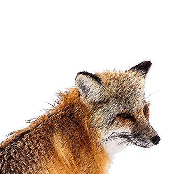 Fox by Zehda