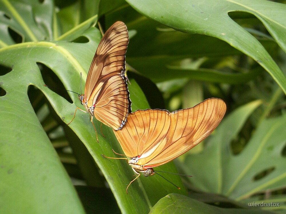 Butterflies In Love by wierdnatox
