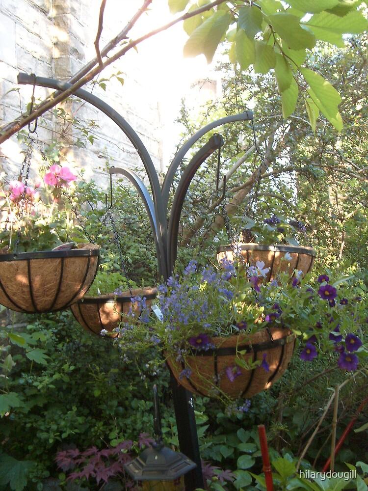 Hanging Baskets by hilarydougill