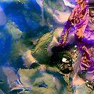 Glowing Kelp by GImages