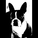 Boston Terrier Love by mimulux