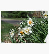 Daffodils in the Wind Poster