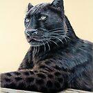 Black Panther - Jaguar by Nicole Zeug