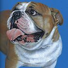 English Bulldog by Nicole Zeug