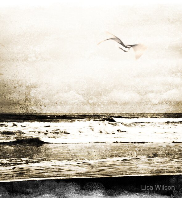 Out of the storm... by Lisa Wilson