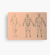 Anatomy sketch of male body Canvas Print