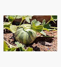 A small green decorative pumpkin with leaves on the ground Photographic Print
