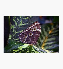 Beautiful natural background with colorful brown butterfly  Photographic Print