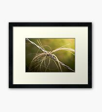 Rural Barbed Wire Animal Hair Framed Print